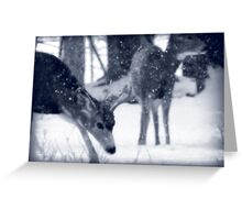 Blue Mule Deer Greeting Card