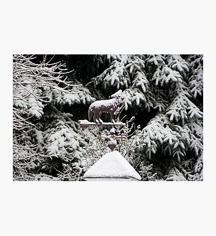 Howling In The Snow Photographic Print