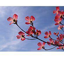 Spring Glory Photographic Print
