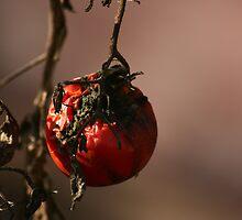 Rotten Tomato by Hannah Yterdal