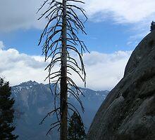 Lone Tree by Jeremy Muratore