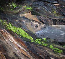 Bark & Moss by Jeremy Muratore