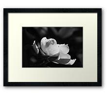 B&W Magnolia 6953 Framed Print