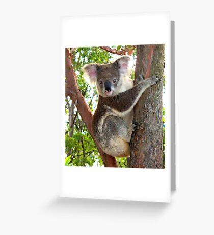 You Can Come Closer, If You Like ! Greeting Card