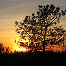 torrey pine sunset by Bruce  Dickson