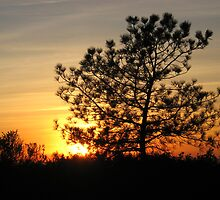 torrey pine sunset by Bruce  Dickson