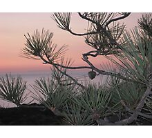 pastels & pines Photographic Print