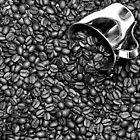 Coffee beans in black and white by Dipali S