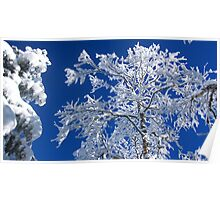 Snow on the Treetops Poster