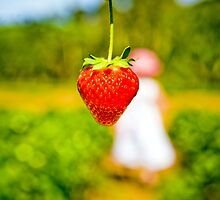 Strawberry Fields Forever by dale73