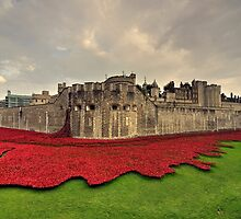 Tower Poppies  by Rob Hawkins
