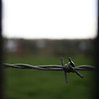 A Barbed View by Debbie Black