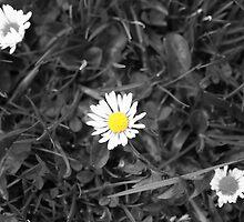 Pick me..... by Debbie Black