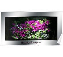 Hedgerow Immigrant Poster