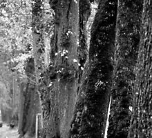 Trees on the Avenue by Tiffany Dryburgh