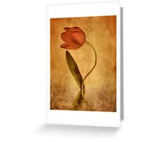 The Tulip * Wall Art Greeting Card