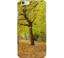 Path of Leaves iPhone Case/Skin