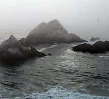 Seal Rock by Jamie Peterson
