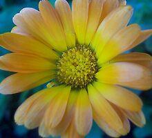 Flower by SandoPhotos