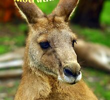 """G'day from Australia"" by ~ Fir Mamat ~"