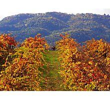 october vineyard Photographic Print