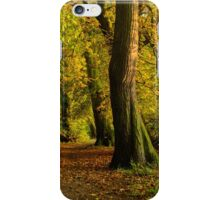 Autumn Avenue iPhone Case/Skin