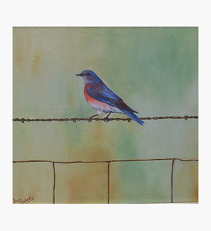 Wren on a wire Photographic Print