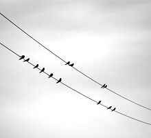on the line.. by Ian Robertson