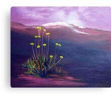 Snow daisies Canvas Print