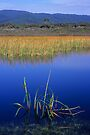 Reeds - Freshwater Lake by Travis Easton