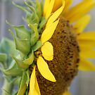side view sunflower by Jeannine de Wet