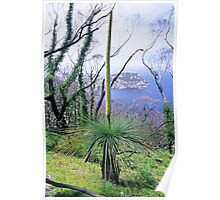 Grasstree and South-east Point Poster
