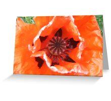 Sunburnt Poppy Greeting Card