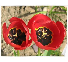 Tulip Twins Poster