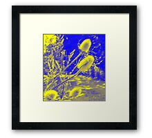 Teasel : Photography by Alys Griffiths Framed Print