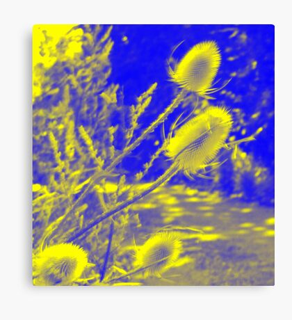 Teasel : Photography by Alys Griffiths Canvas Print