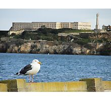 Seagull by the Bay Photographic Print
