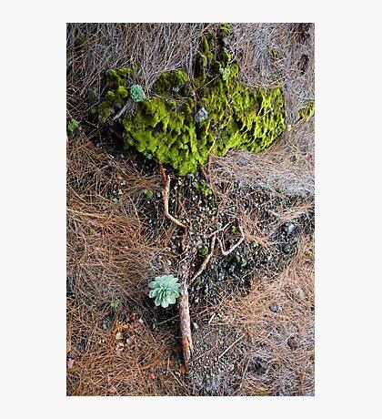Earth Art Photographic Print