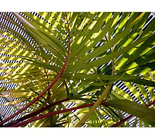 In the glasshouse Photographic Print