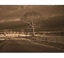 lone Photographic Print