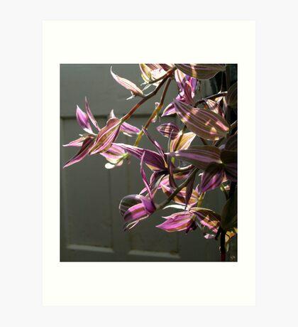 colourful glasshouse foliage Art Print