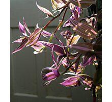 colourful glasshouse foliage Photographic Print