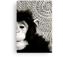 Shades Of Monkey Grey Canvas Print