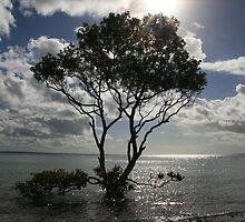 Tree off the Whitsunday Islands by Thomas Entwistle