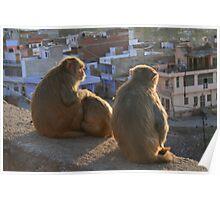 Monkeys enjoying evening sun. Jaipur, India Poster