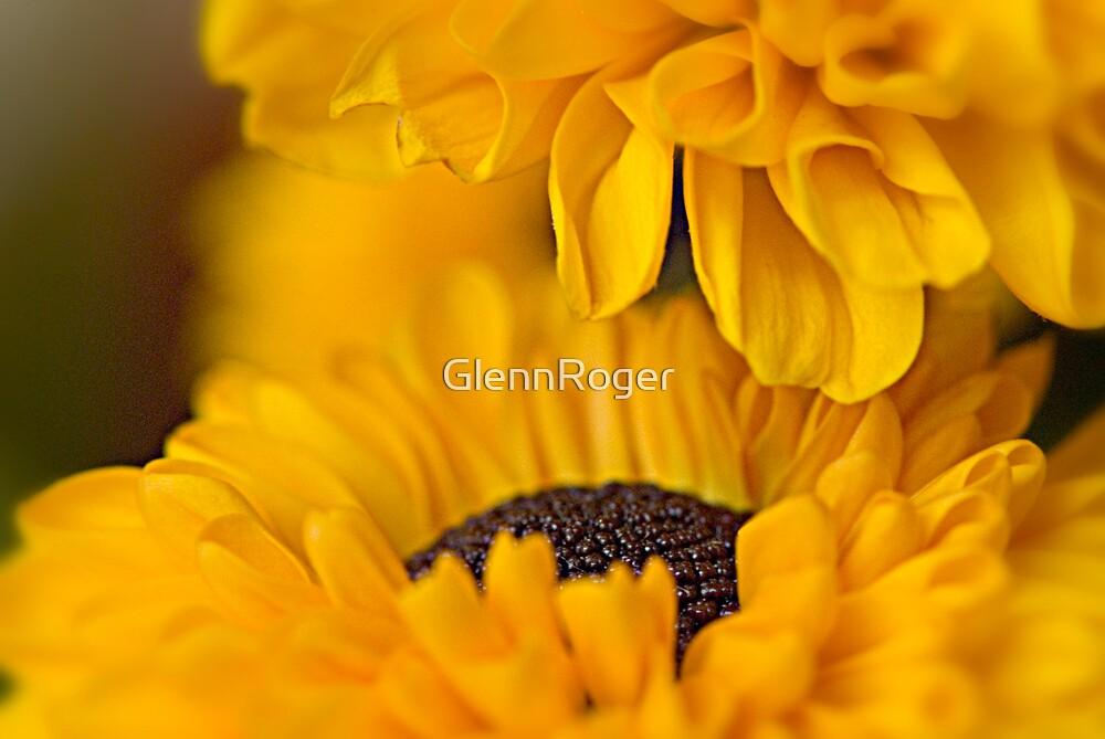 Summer Gold  by GlennRoger