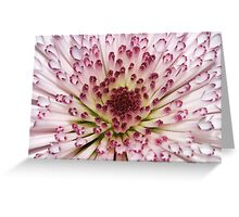 Bloom Explosion Greeting Card