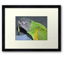 Are these sunflower seed flavour?? Framed Print