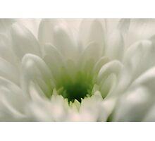 Bloom Dreams Photographic Print