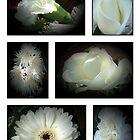white flowers by cynthiab